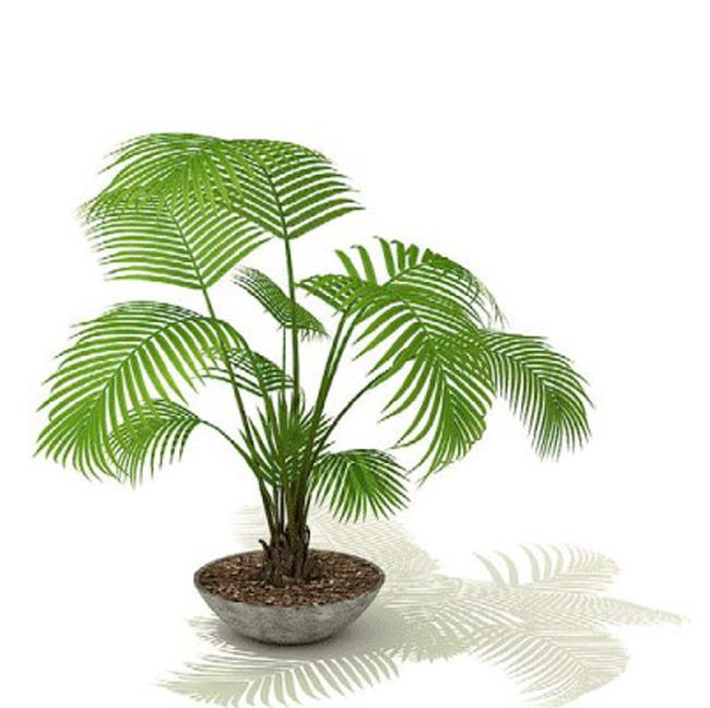 张志华讲述-你的生肖养什么植物最旺你?